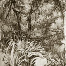 Graf-forest-1